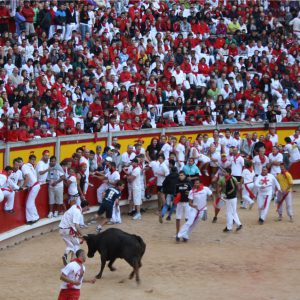 Carnage in the bull ring: A bull tries to gore one of the contestants.